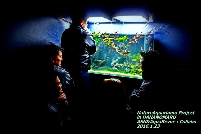 花乃丸 ASN&AquaRevue