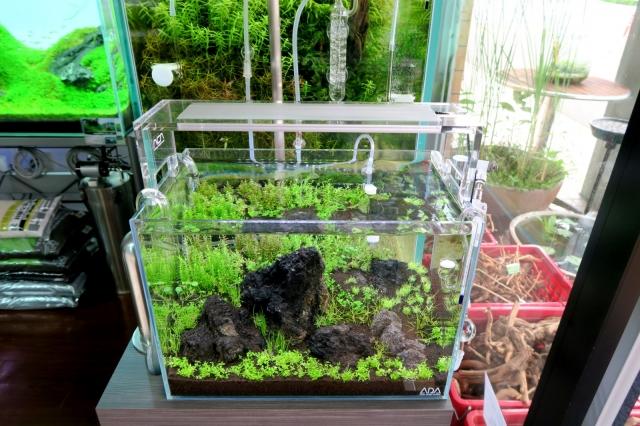 36cm水槽 6月21日植栽