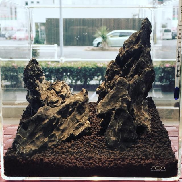 ADA スぺリア水槽に龍王石配石 種まきします。!