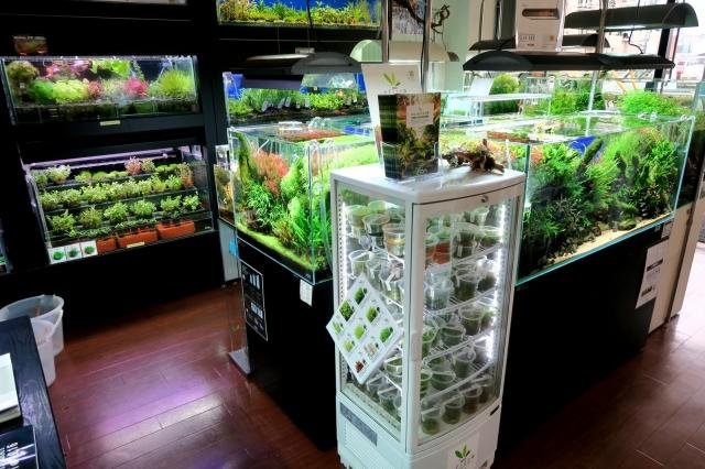 店内には豊富に水草を取り揃えていますので、お好みの水草をお探し下さい。