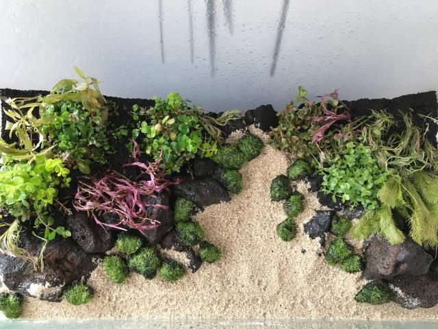 配色と配植を考え植栽を施す事が大切ですね!