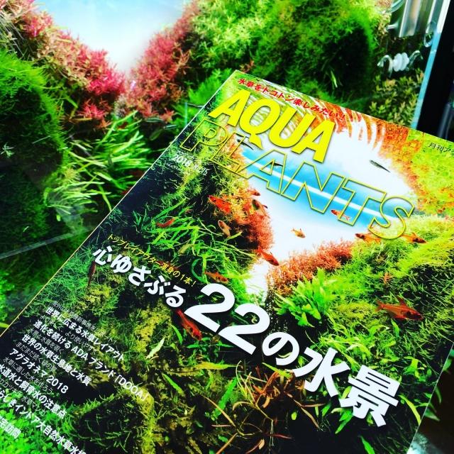 AQUAPLANT 8月号 表紙を飾る!