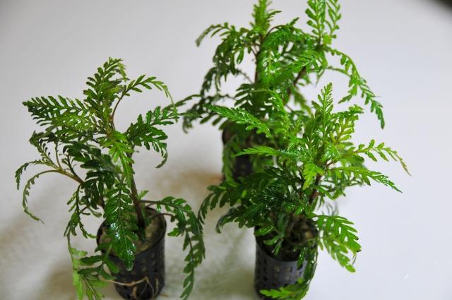 Point有茎草ですが、活着性も備えていますので幅広く利用できます。