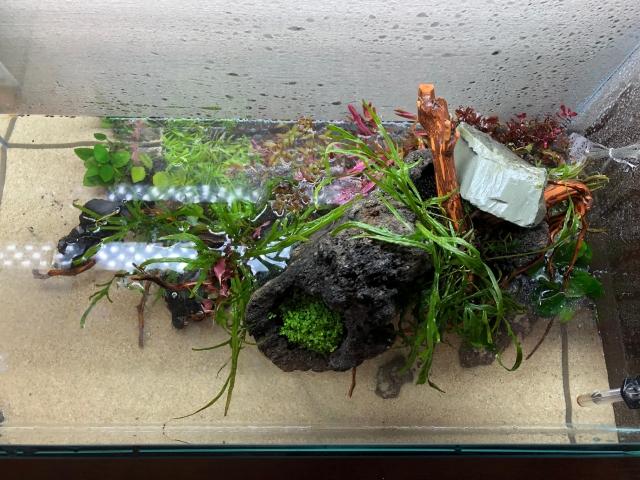 植栽完了!シダ系の水草は既存の物を再利用 致しました。