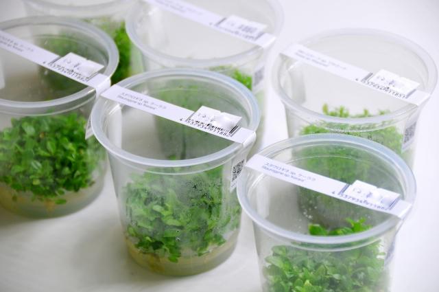 鮮度抜群で害虫や残留農薬の心配もございません。 植栽後の生長スピードも速いので、簡単に育成できますよ!