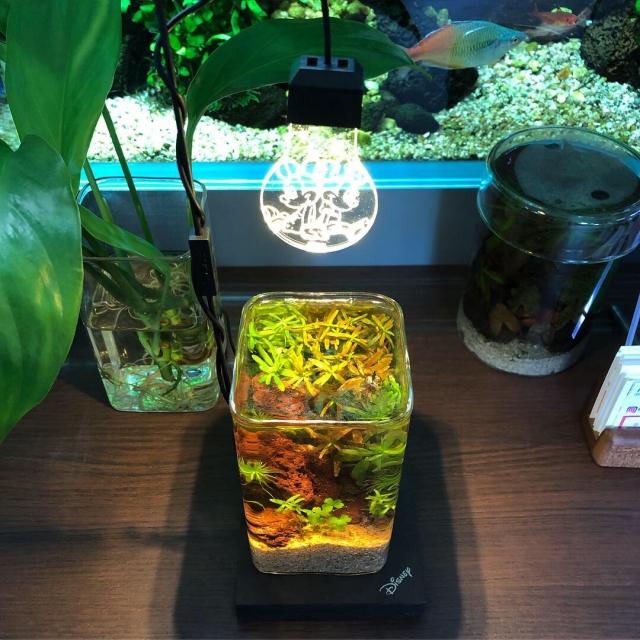 植物栽培ライトの威力を発揮! 水草だって元気に育つ