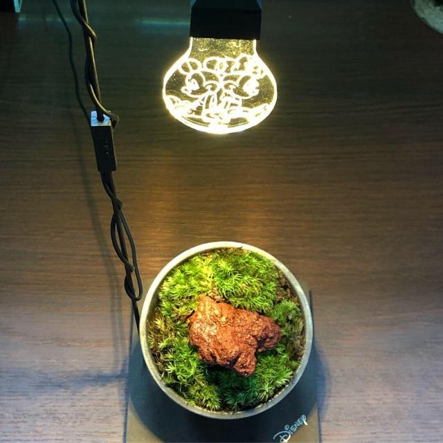 お部屋のお洒落インテリアライトで苔リウムを愛でる!
