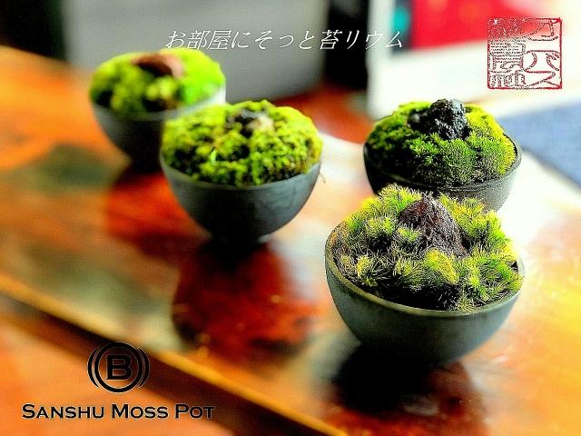 Sanshu Moss Pot 苔鉢SET