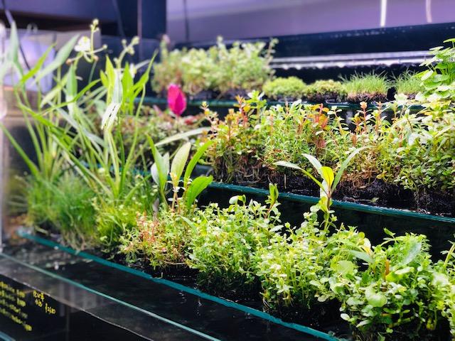 植物にとって最高の季節を迎えています。それぞれの佗び草は元気そのものです。