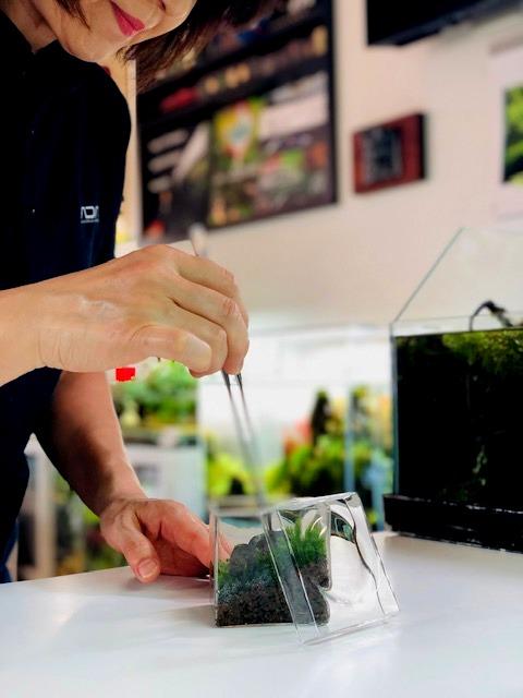 8cmのキューブガラスに繰り広げられる苔庭の世界