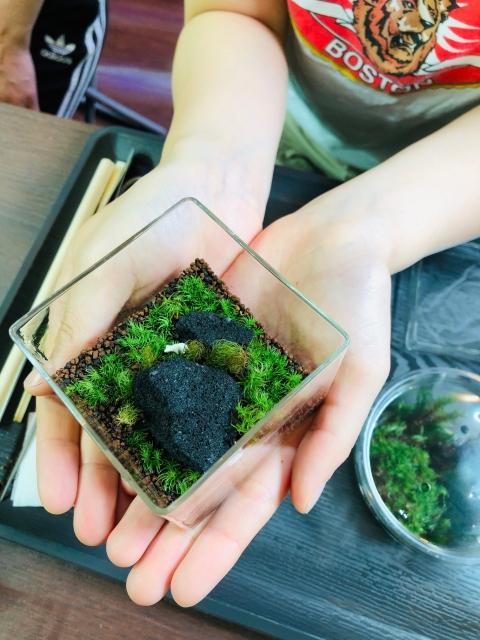 手のひらサイズの可愛い苔リウムの完成です。