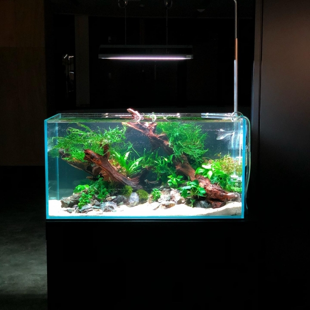 企業様向けサービスのご提案 名古屋市内企業様設置水槽