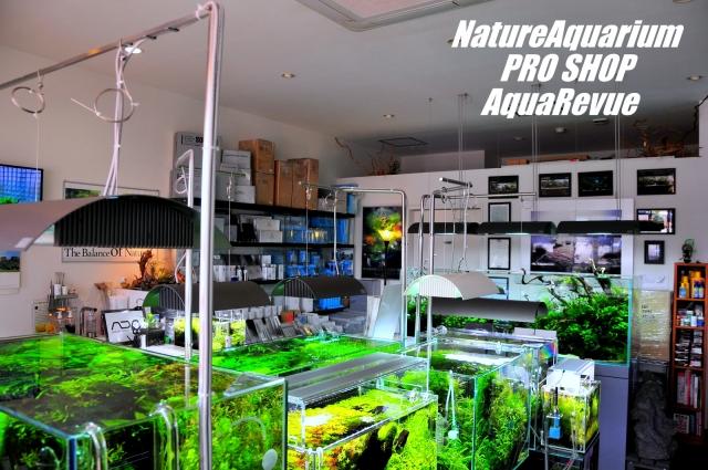 店内には、水草が綺麗に繁茂した水槽が、大小14水槽ございます。