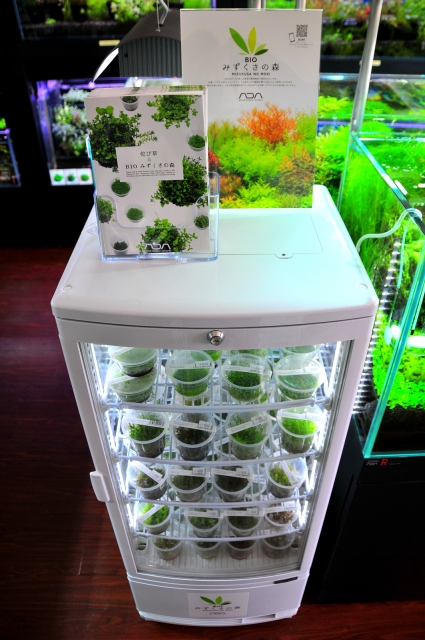 """新規導入の水草専用クーラー大活躍中""""鮮度""""が命の水草を大量在庫いたしてます。"""