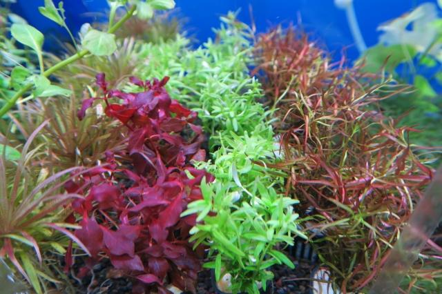 水中葉の有茎草は種類も豊富に取り揃えています。